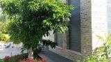עיצוב גינה בית ברעננה