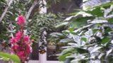 עיצוב גינה בשילוב עצי פרי