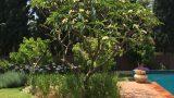 עיצוב גינה עם עצי פרי בית בסביון