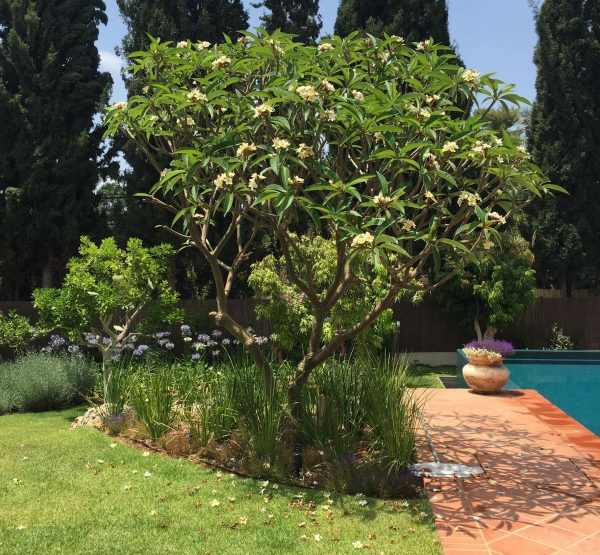 גינה בסביון עם עצי פרי